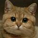 Аватар пользователя Misbug