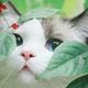 Аватар пользователя MJ2692