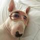 Аватар пользователя Lastaid