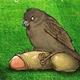 Аватар пользователя kaliukinpa