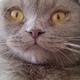 Аватар пользователя Lyrane