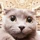 Аватар пользователя Stormmen