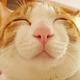 Аватар пользователя Nurbz