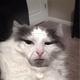 Аватар пользователя ShellFox