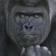 Аватар пользователя raven742