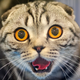 Аватар пользователя rukozavr