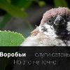 Аватар пользователя Opexoed