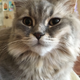 Аватар пользователя shnur112