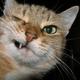 Аватар пользователя onL1me