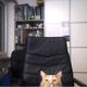 Аватар пользователя funri