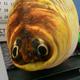 Аватар пользователя Weisamann