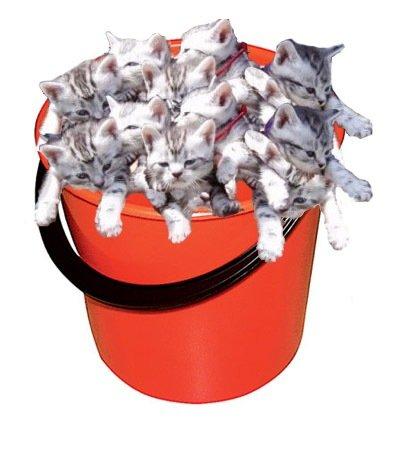 мискм стоят рядом с мусорным ведром у кошки конкретно прогревать потолок