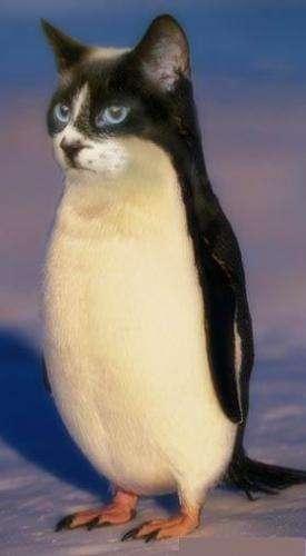 Хуй пингвина