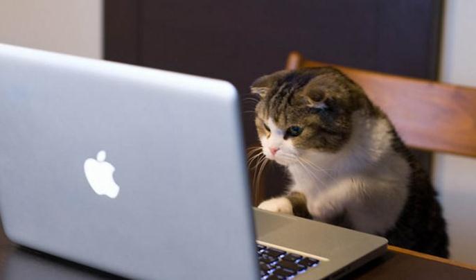 Коты фото для компа