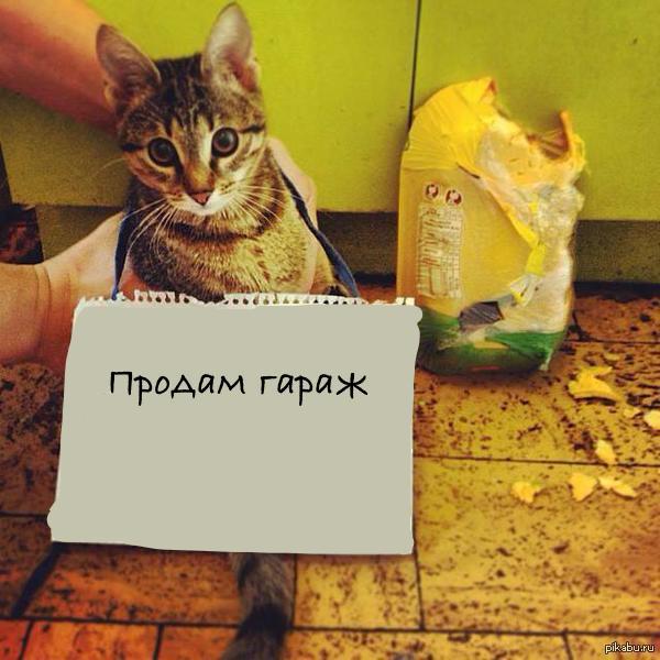 Кот воровка