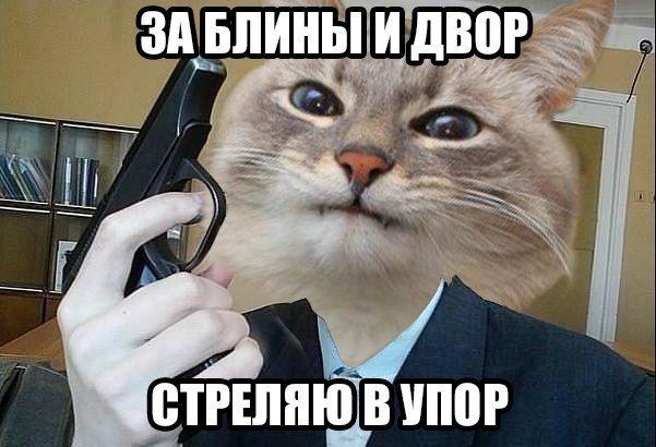 Мем с довольным котом