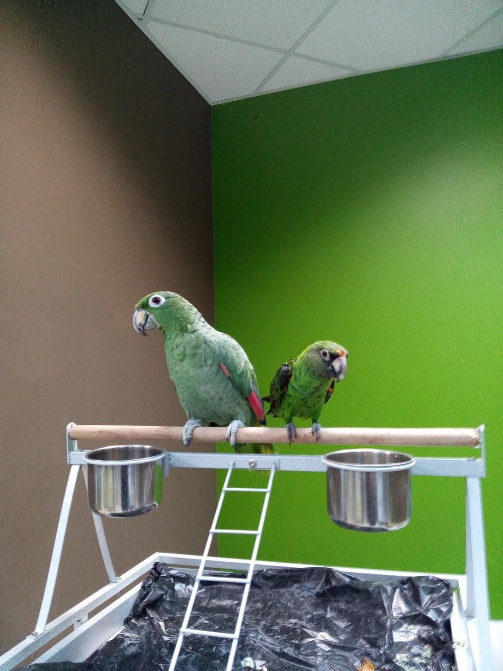 Юмор ворона гот попугай пидр