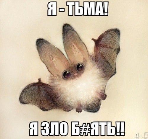 https://cs5.pikabu.ru/images/big_size_comm/2015-11_5/144843813116773951.jpg