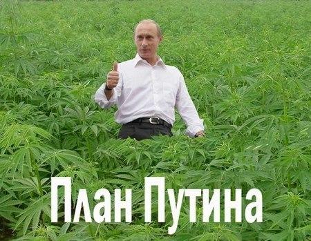 Путин конопля семена конопляные оптом