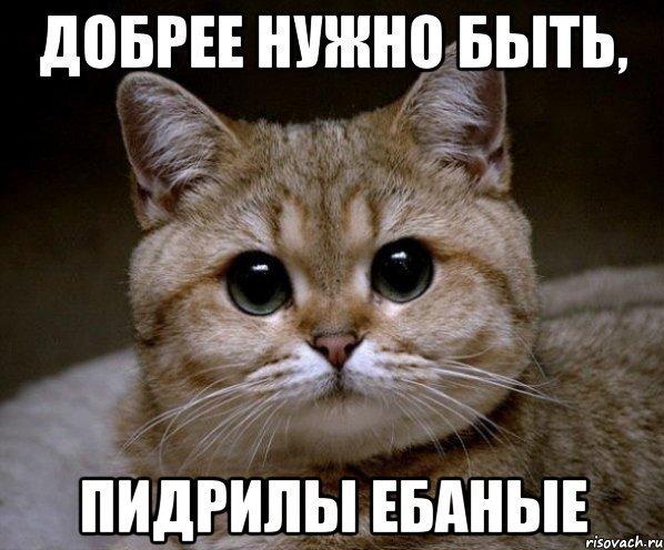 Мем сигнал потерян кот