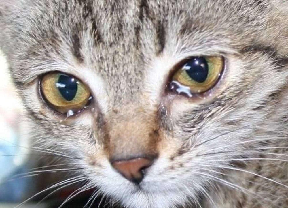 Что означает кот на машине
