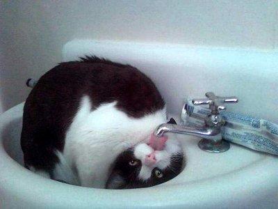 Ленивый кот воду пил