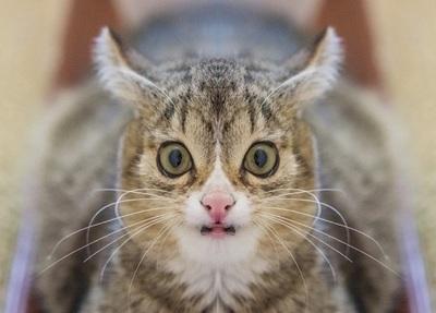 Кот который почти засмеялся