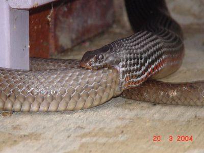 Засунула змею в фото 104-226
