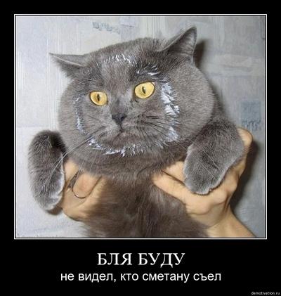 Кот и я картинка и комментарий