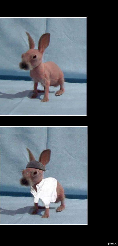 Бритый кролик