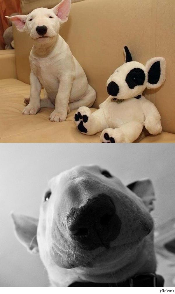 Милейшие собаки.