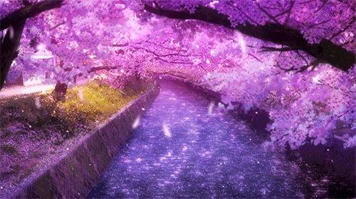 Весна пришла и Сакура расцвела.