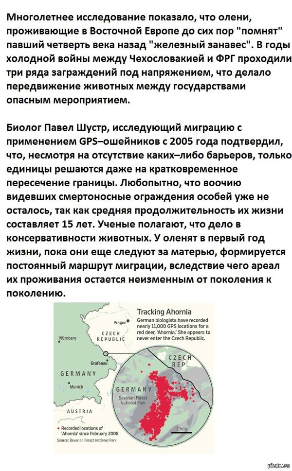 Холодная война оленей источник: Д3