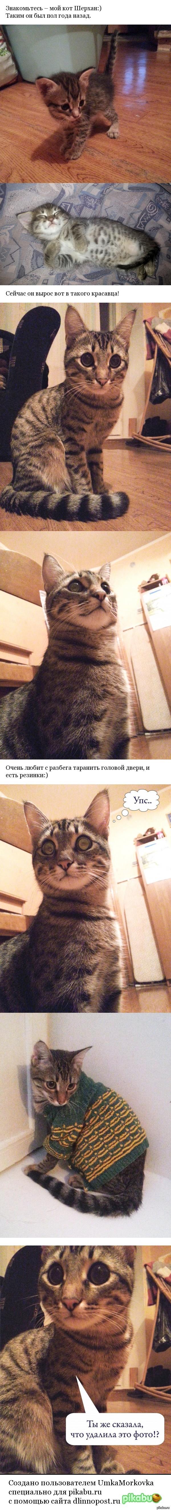 Мой котейка:) Обожает есть варёную кукурузу и таскать батон из хлебницы)