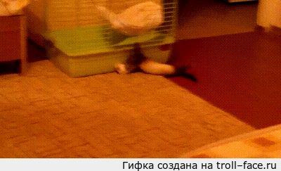 Хорек качок