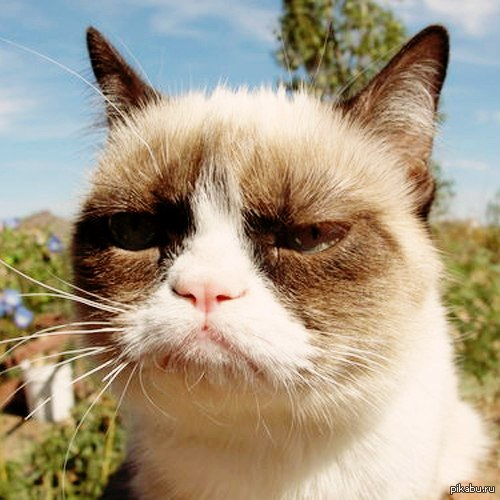 no grumpy cat quickmeme - 625×597