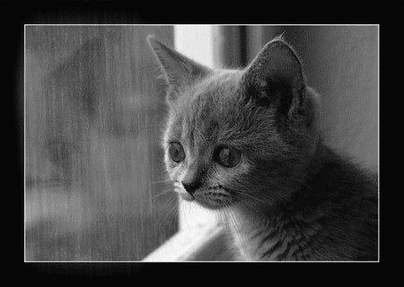 Коты безысходность