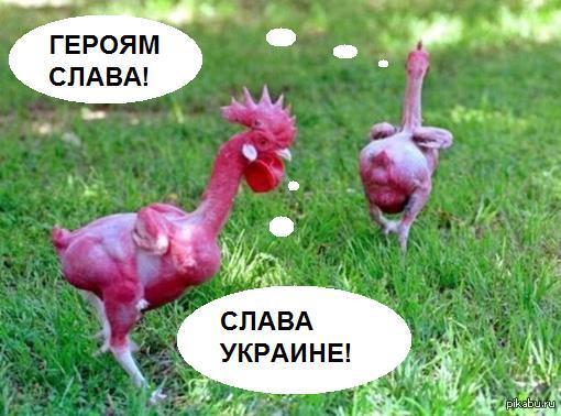 Вот как выглядят укронацы со стороны.
