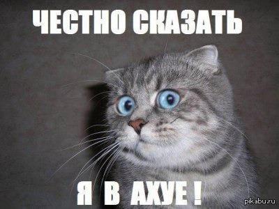 Реакция кошек на марихуану купить майку марихуана