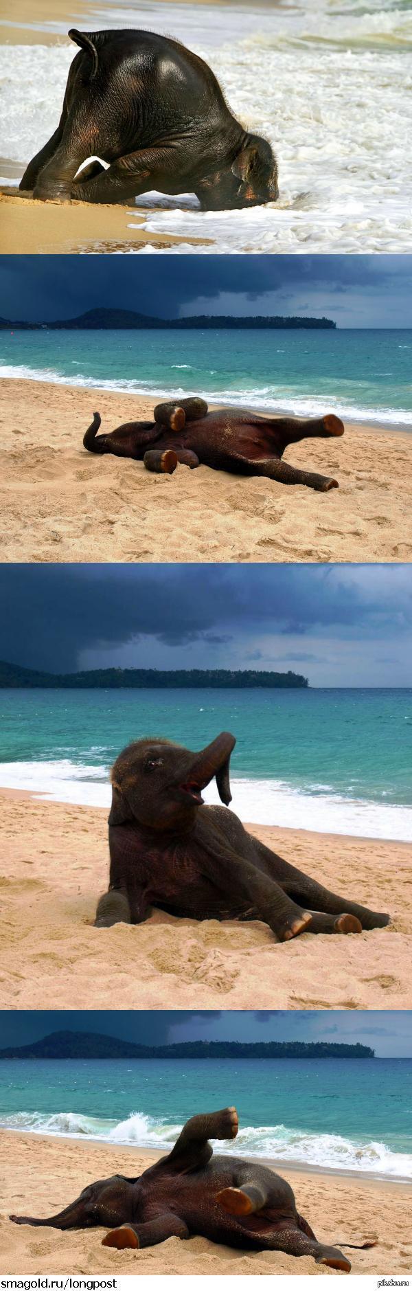 Слоненок на море картинки