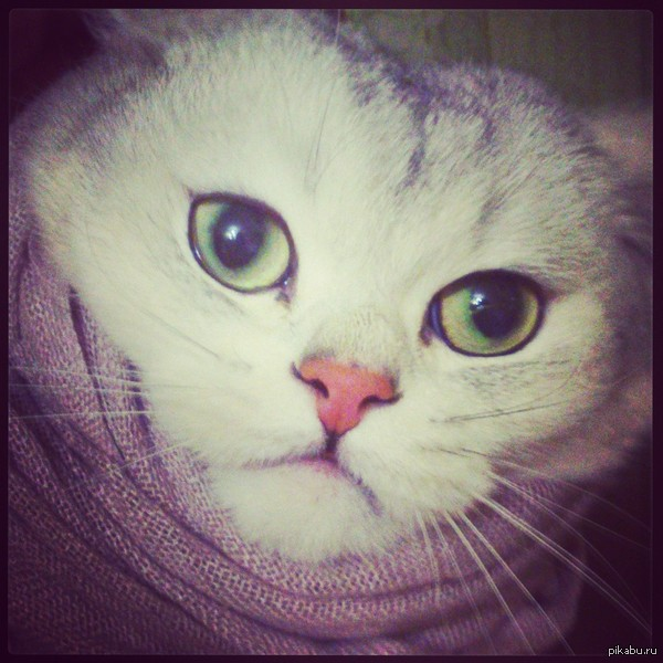 Мой котик) Черчилль, он же ЧеКа, он же Жопа) Фото моего котка из инстаграма))