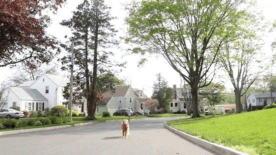 Дрон выгуливает собаку