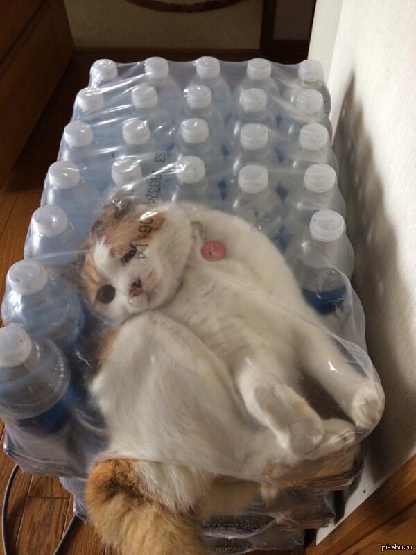 indoor kittens for sale bristol