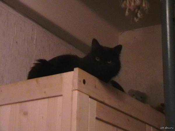 Кошачья дорога в рай Здравствуйте, кот безнадежно заболел, скоро усыпим, пожелайте ему всего наилучшего, и спасибо вам!
