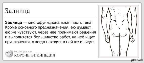 Жопа многофункциальная часть тела