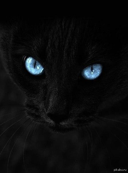 картинки чёрных котиков
