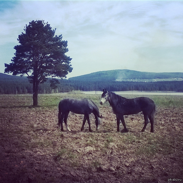 Красотища как по мне ^^ Фотография сделана на nokia lumia 820 + чуть чуть фильтра. Часто езжу по Уралу и делаю подобные фотографии. Если понравится, выкину еще ^_^