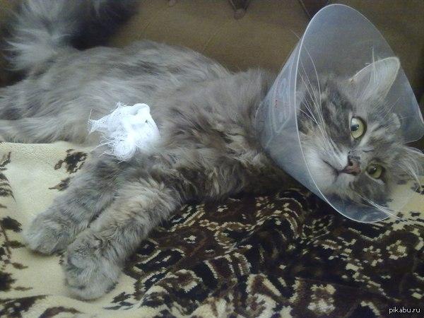 Пустой взгляд. Вчера коту сделали операцию, сшивали мышцы. Он нас ненавидел. Сегодня прицепил экран, что бы не разлизывал шов. Он просто лёг и смирился со своей участью.