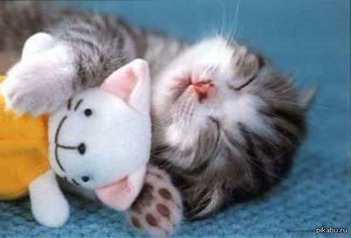 спящий котенок фото