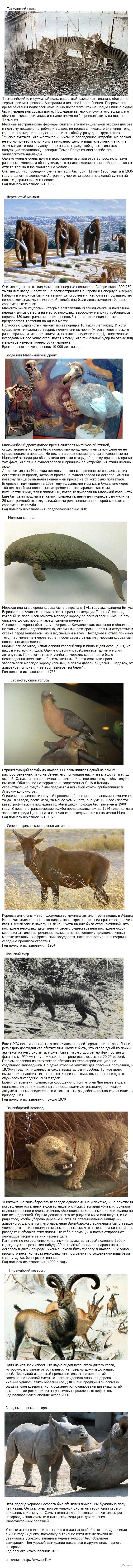 10 видов животных, которые истребил человек Вдохновился постом о редких животных